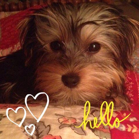 Elie Hello